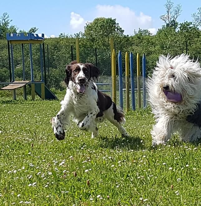 location-chien-canin-agility-obstacle-la-rochelle-chatelaillon
