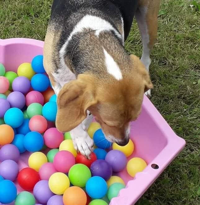 location-chien-canin-agility-obstacle-la-rochelle-rochefort