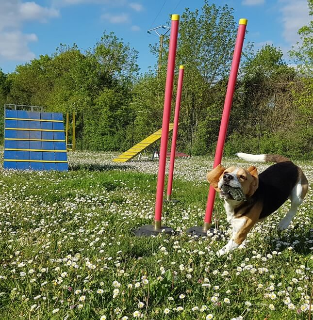 location parc canin-agility-obstacle-la-rochelle