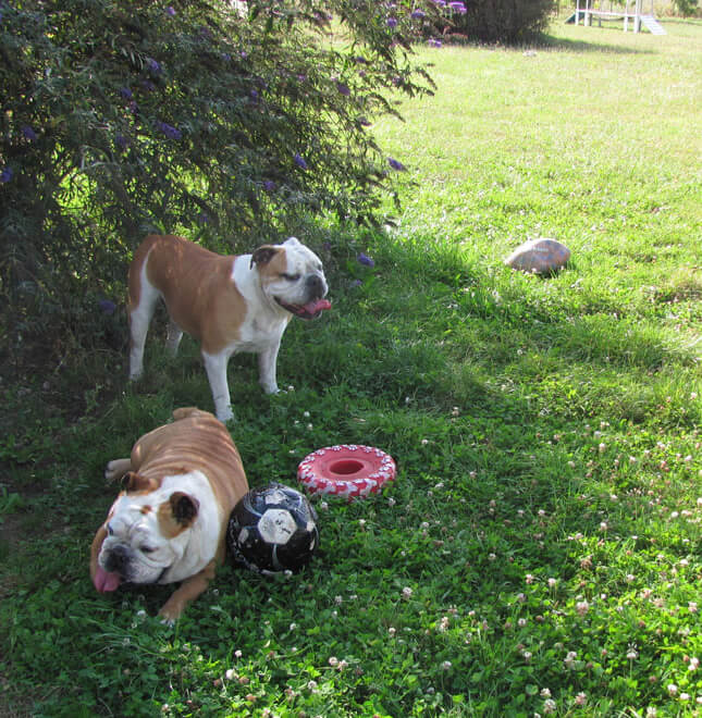 location-terrain-jeu-chien-canin-agility-obstacle