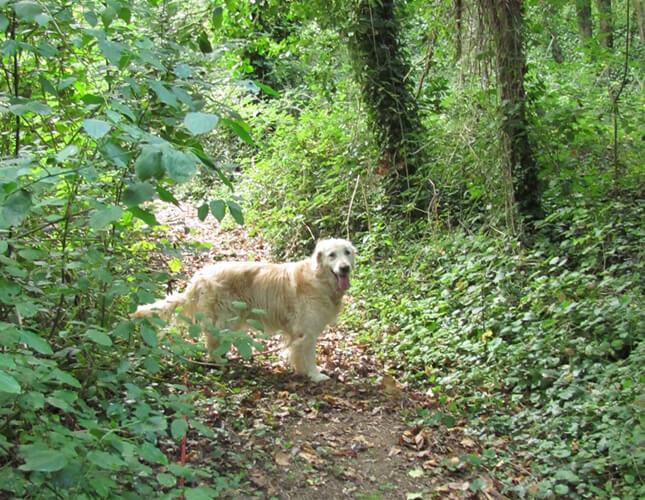 meilleure-pension-canine-la-rochelle-rochefort