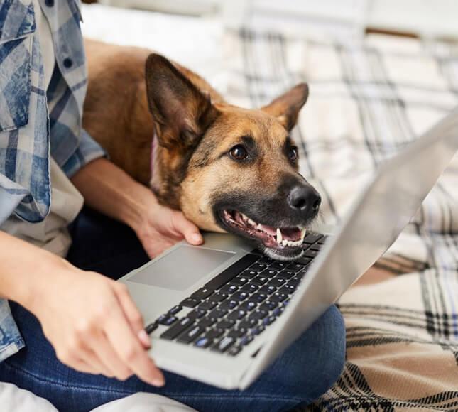 tarif-garde-chien-chat-pension-la-rochelle-meilleure
