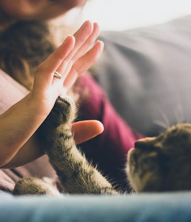 visite-chien-chat-domicile-la-rochelle-aytre-dompierre-lagord-puilboreau