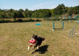 parc-canin-la-rochelle-location-jeu-obstacle-agilty-chien