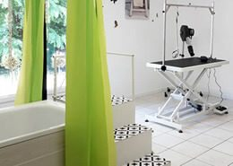 toilettage-chien-libre-service-la-rochelle-ile-de-re-rochefort-lavage